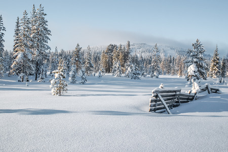 low temperature: Forest and country covered with snow on sunny day during cold white winter in Syote in Finland. Stock Photo