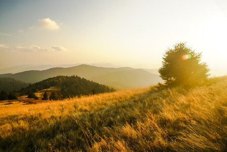 Photo of large field with tree and mountain range Low Fatra in distance in Slovakia.
