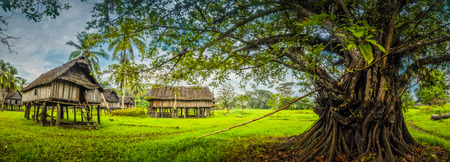 a house with a straw: Panoramic photo of large tree and traditional house made of straw and wood in Palembe, Sepik river in Papua New Guinea.