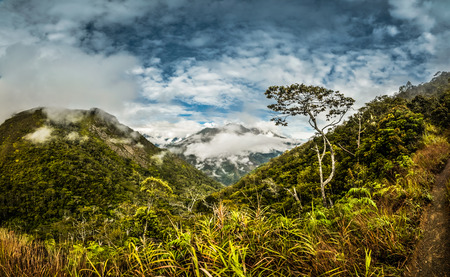 dani: Photo of rich greenery and high mountains covered by morning fog in Dani circuit near Wamena, Papua, Indonesia.