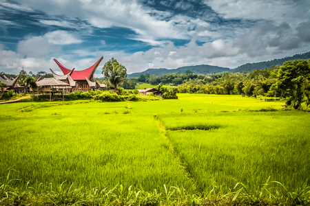 Photo of ancestral house and large field of grass surrounded by forest in Tampangallo, Toraja region, Sulawesi in Indonesia.