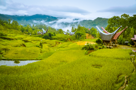 Photo of fields of grass and morning fog in forest near village with traditional tongkonans in Toraja region in Sulawesi, Indonesia. Reklamní fotografie