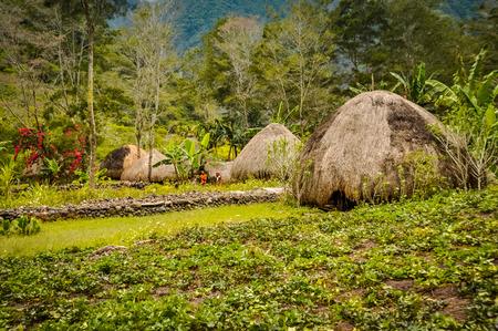 伝統「ワラ荷造りの写真家ダニ回路ワメナ パプア、インドネシア付近の庭園。この地域で孤立した地元の部族から人々 に会うことが 1 つ。