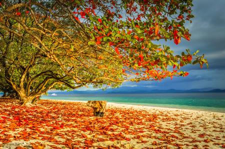 Photo of large tree with colourful leaves on sand beach near sea in Pulau Lihaga in North Sulawesi, Indonesia.