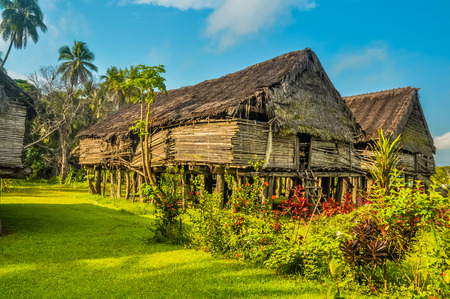 a house with a straw: Photo of large house made of straw surrounded by greenery in Avatip, Sepik river in Papua New Guinea. In this region, one can only meet people from isolated local tribes.