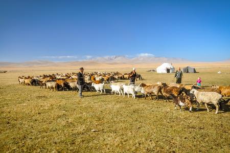 Son Kol, Kyrgyzstan - circa September 2011: Photo of herd of sheep and goats in Son Kol, Kyrgyzstan. Documentary editorial.