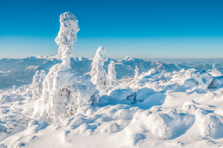 Beautiful snowy landscape with trees covered in snow battered by wind on sunny day in mountains of Slovakia. Standard-Bild