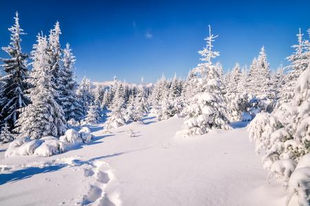 Idyllic winter. Beautiful sunny day in winter forest in Slovakian mountains. Standard-Bild
