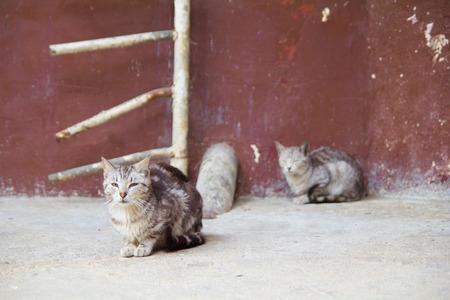 Homeless cats sitting on the street - studio shoot photo
