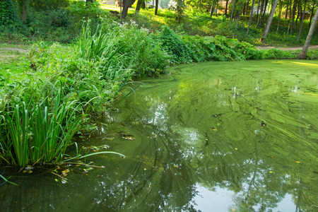 Vegetation at the bank of the green water pond, outdoor image Banco de Imagens
