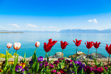 Tulip flowers growing on Lake Geneva shore in Lausanne Banque d'images