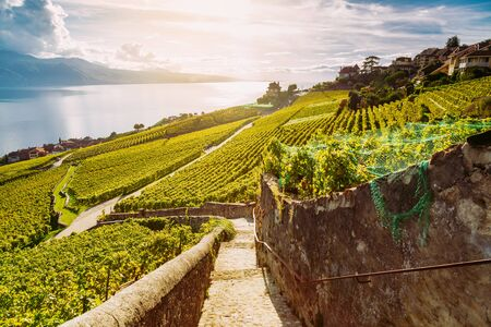 Lavaux, Switzerland: Hiking trail among Vineyard Terraces with Lake Geneva view during sunset, Canton Vaud, Switzerland Standard-Bild