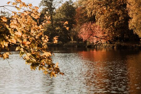 Lodz, Poland: Yellow autumn trees by the lake in the park during sunset