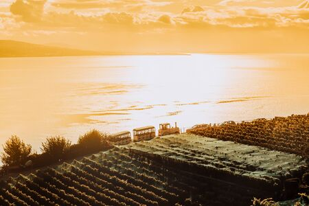 Lavaux, Switzerland: Touristic train over the Lake Geneva during sunset seen from Lavaux vineyard tarraces in Canton of Vaud