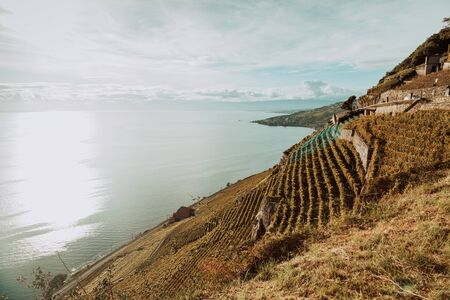 Lavaux, Switzerland: Lake Geneva landscape seen from Lavaux vineyard tarraces in Canton of Vaud Banco de Imagens
