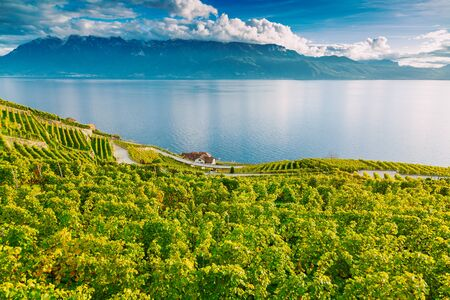 Lavaux, Switzerland: Lake Geneva and the Swiss Alps landscape seen from Lavaux vineyard tarraces in Canton of Vaud Banco de Imagens