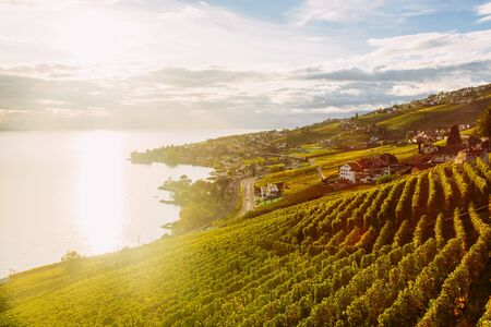 Lavaux, Switzerland: Lake Geneva and the Swiss Alps landscape seen from Lavaux vineyard tarraces during sunset, Canton of Vaud