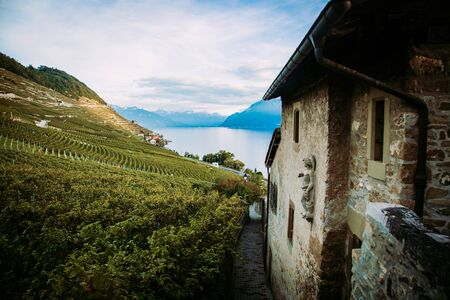 Lavaux, Switzerland: Lake Geneva, green vineyards and old hause on Lavaux vineyard hiking trail in Canton Vaud Banco de Imagens