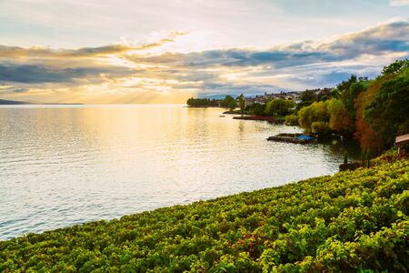 Sunset over the lake geneva and grape plants in the foreground, Switzerland Banco de Imagens