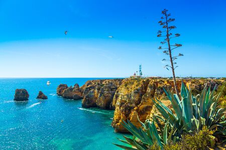 Amazing cliffs above Algarve coastline and agave succulent plant neer Lagos city in Portugal, Europe