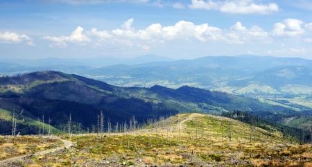 forest fire: Los �rboles muertos tras incendio forestal de monta�a