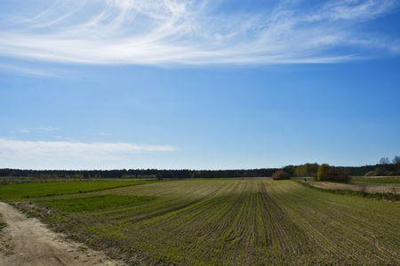 arable land: Arable land in Polish village