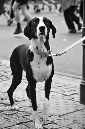 Dog in consternation photo
