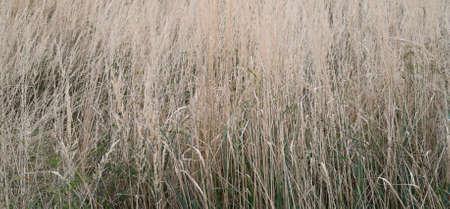texture of natural autumn grass 免版税图像
