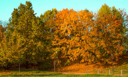 the colors of the leaves on the trees in fall