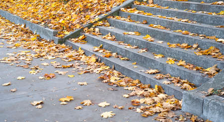 autumn leaves on the stairs in the park 免版税图像