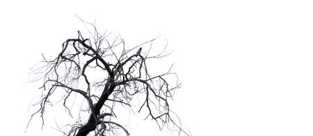 bird on a tree without leaves
