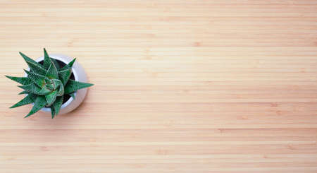 decorative plant in a pot on a wooden background