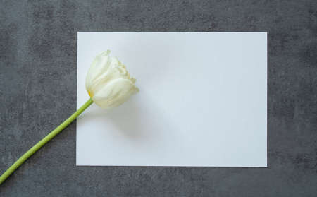white rectangular invitation on a gray background and a white tulip