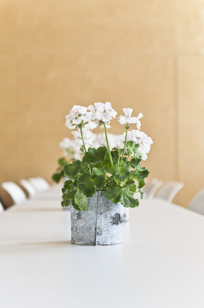 compostion: White Geranium on a table
