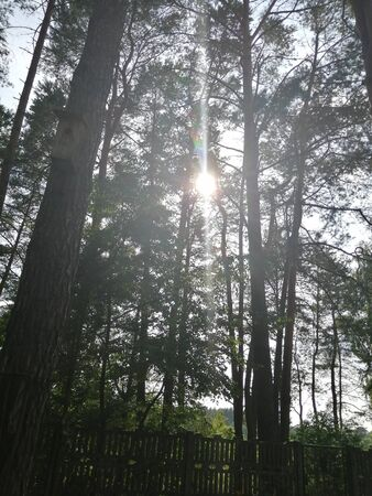 Kalety, July 2019. The sun between the trees in the forest Banco de Imagens - 149590193