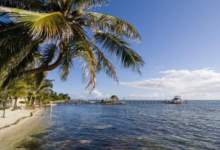 Palm tree and dock in clear blue tropical water in Caye Caulker, Belize photo