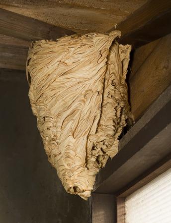 Hornets nest on the roof garden house
