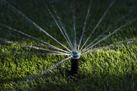 Sprinkler watering grass photo