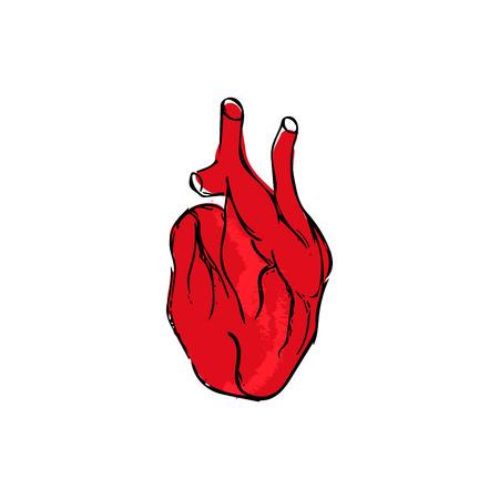 Real heart illustration, medical biology vector Illustration