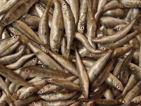 largesse: Fish opulence, Greek fish market.