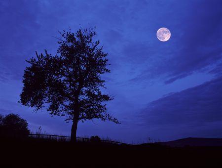 Full moon. photo