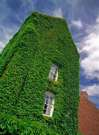 The old house overgrown with ivy. photo
