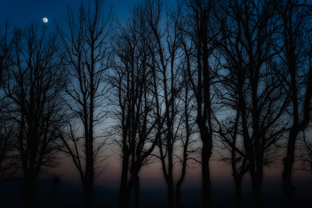 Silhouettes of autumn trees at dusk