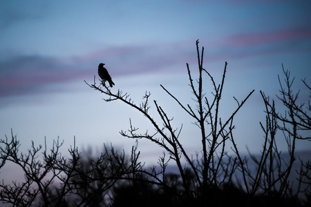Black bird above branches photo