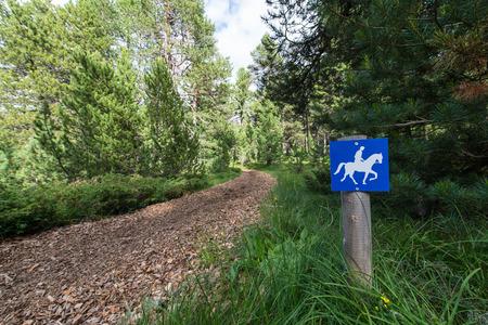 cow teeth: trail for horses