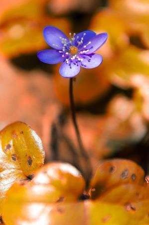 violet flower with orange background photo