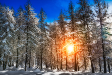filtering: Snowy forest with sunlight filtering