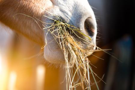 馬が草を食べて