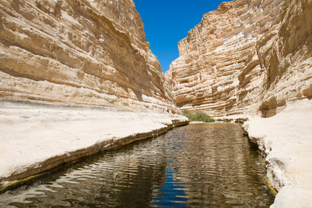 ein: EinAvdat Canyon in the Negev desert. Fresh water flowing in the river canyon. Sandstone walls.