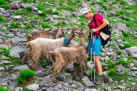 mountain goats: Donna escursionista incontra capre di montagna Archivio Fotografico